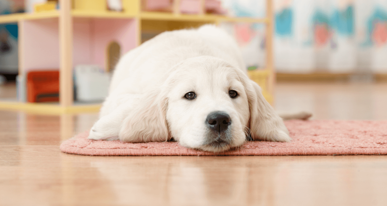 pet friendly flooring ideas